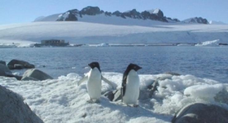 Раскрыта загадка травы, выросшей в форме буквы М в Антарктиде