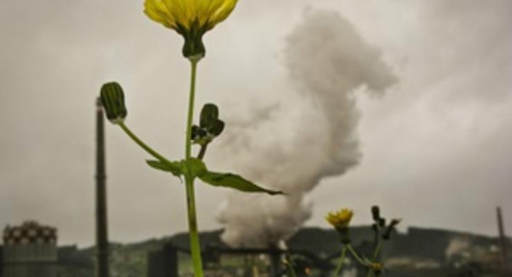 Кенийские ученые поставили под сомнение экологичность биотоплива