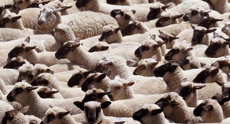 В России полицейские задержали нетрезвых охотников на овец