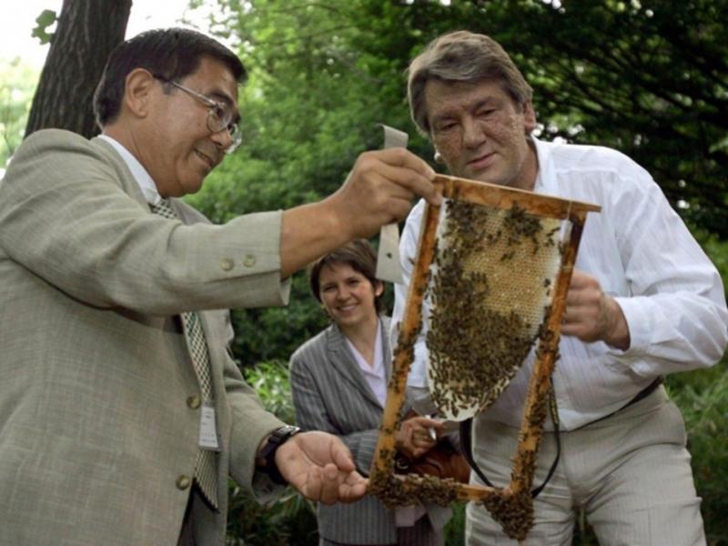 Ющенко ушел к пчелам: чем занимается на пенсии экс-президент - Новости  bigmir)net