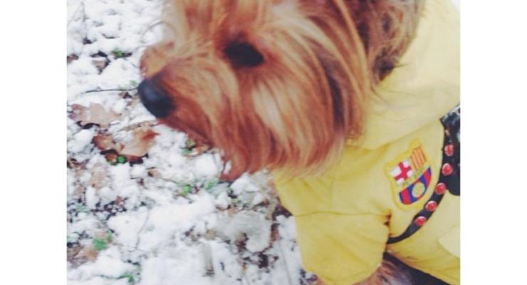 Зима в Киеве: на город обрушилась снежная метель (ФОТО)
