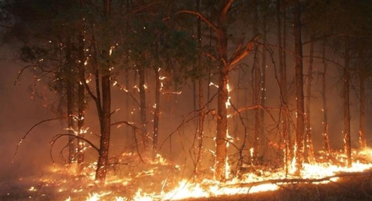 В Украине сохраняется высокий уровень пожароопасности