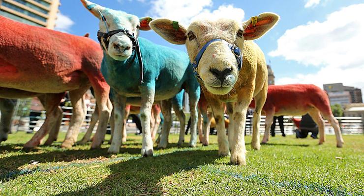 Животные недели: освобожденные черепахи и разноцветные овцы (фото)