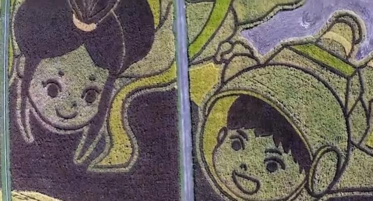 Японцы превратили рисовое поле в огромную картину