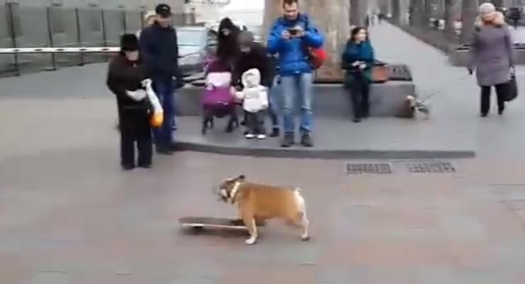Веселый бульдог на скейте устроил покатушки у елки в Одессе