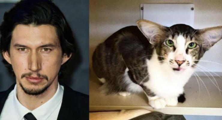 В сети нашли похожего на злодея из Звездных войн кота