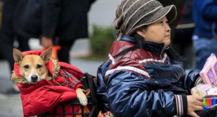 На Тайване из-за аномальных холодов умерли более 50 человек