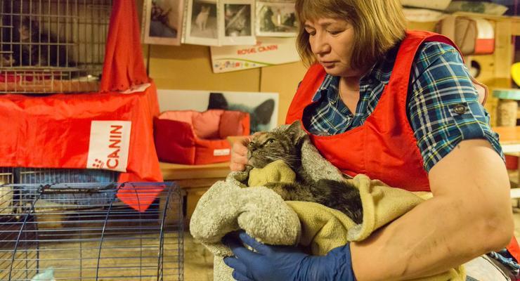 В результате пожара в Эрмитаже задохнулись музейные кошки