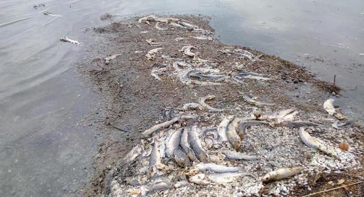 Из-за жары массово гибнет рыба в водоемах Одесской области