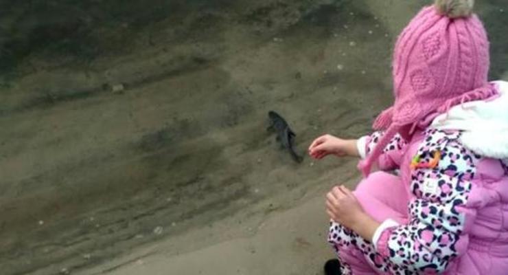 Впервые в истории 5 тоннами мальков зарыбили Десну возле Киева