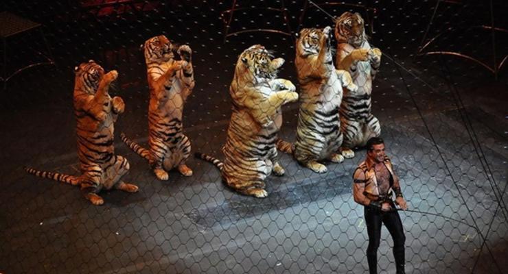 Украинские цирки должны за год обновить программы без животных