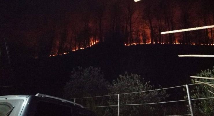 В России из-за фейерверков загорелся лес