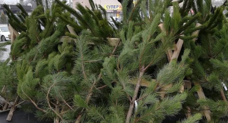 Подсчитано, какой ущерб Украине нанесла незаконная продажа елок