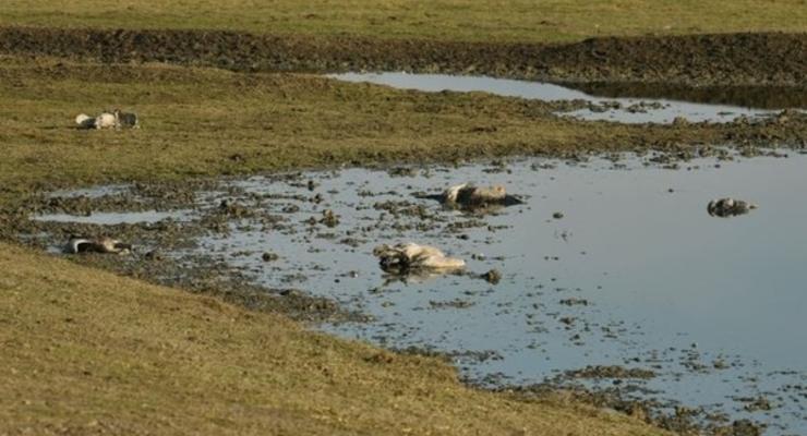 Названа причина массовой гибели журавлей в Аскания-Нова