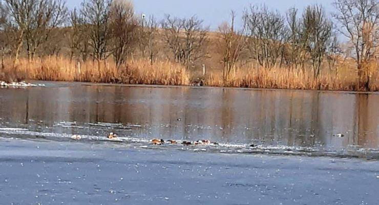 В заповеднике Аскания-Нова погибли около 200 редких птиц