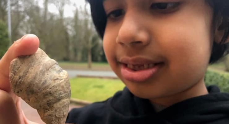 В Британии ребенок нашел окаменелость, возрастом 500 миллионов лет