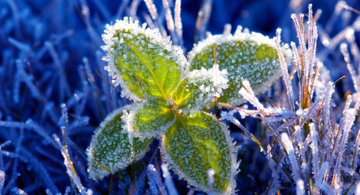 Заморозки, ветер: В Украину идет похолодание