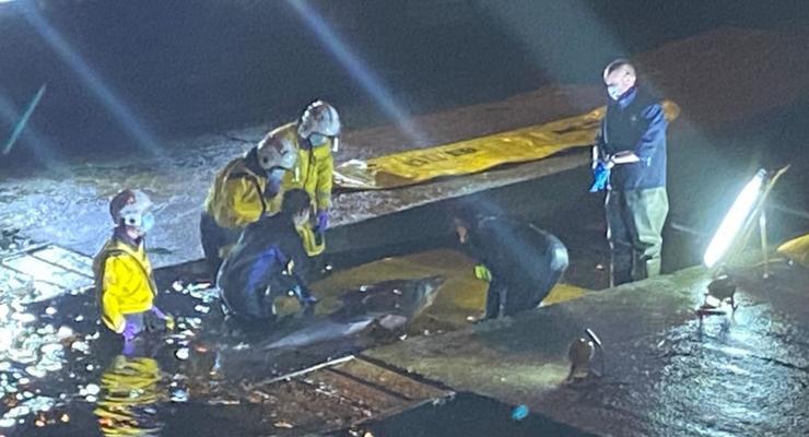 Появились кадры освобождения заплывшего в Темзу кита