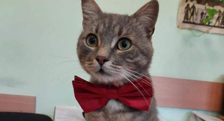В Черновцах трудоустроили кота