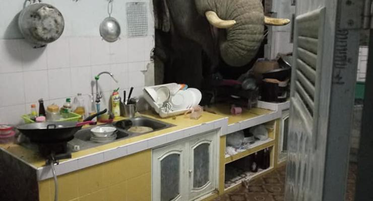 В Таиланде слон-лакомка проломил стену кухни ради мешочка риса