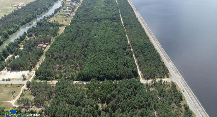 В Киевской области пытались приватизировать 50 гектаров леса на 100 млн. гривен
