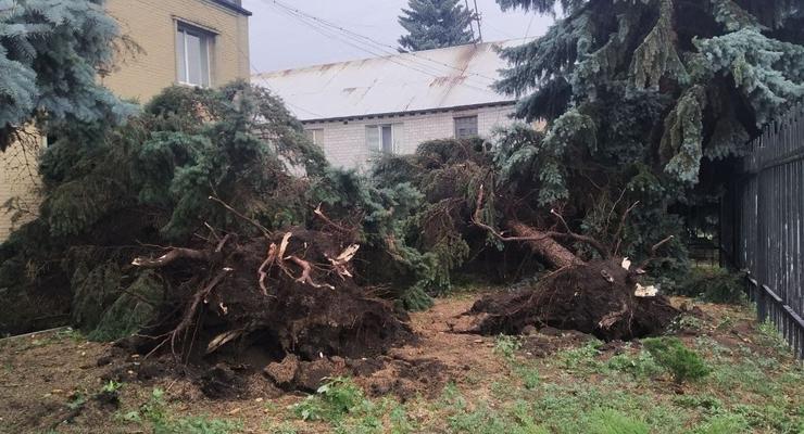 В Украине из-за шквального ветра погибли два человека