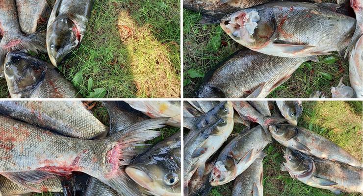 В Днепре зафиксирована массовая гибель рыбы