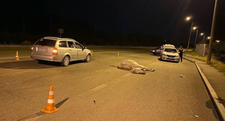 В Запорожье в результате ДТП погибла лошадь