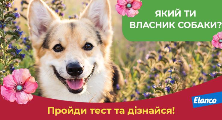 Офіційні правила проведення акції «Який ти власник собаки?»