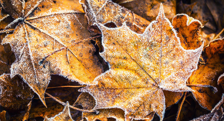 Народный синоптик предупредил о заморозках в сентябре и тепле в октябре